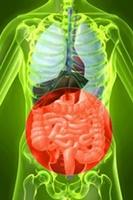 organes 200